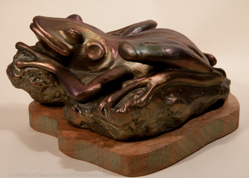 Sunning bronze frog.