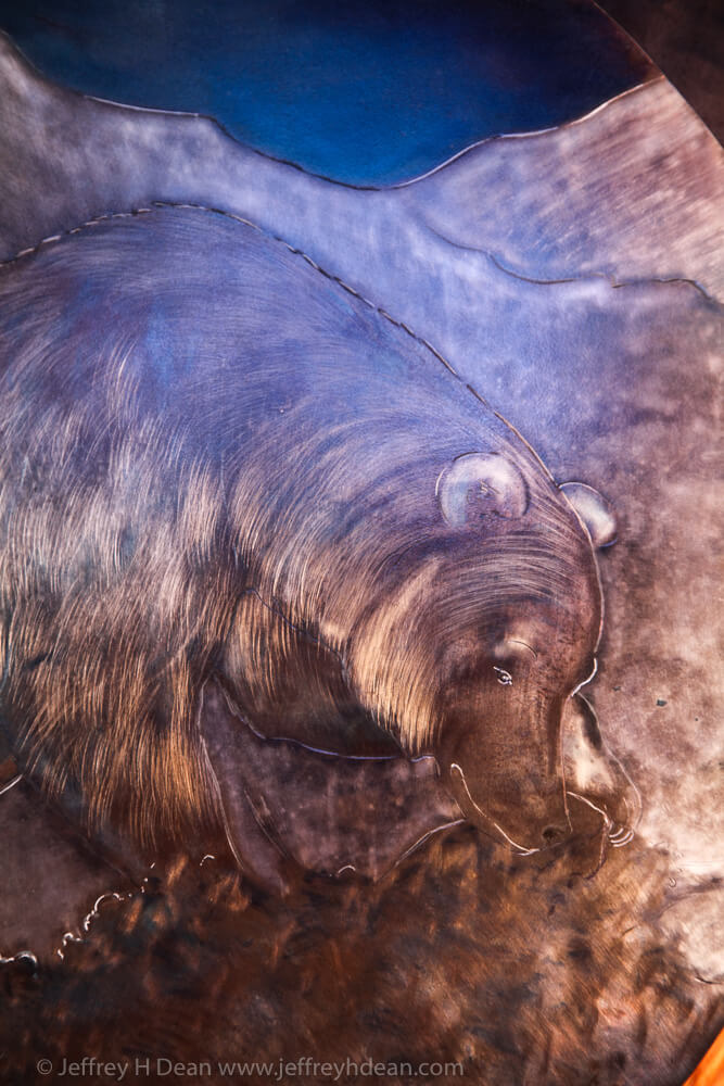 Detail of foraging grizzly bear.