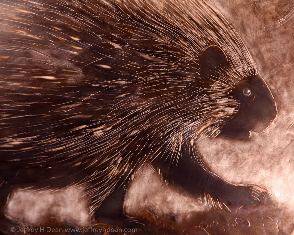 Detail of porcupine.